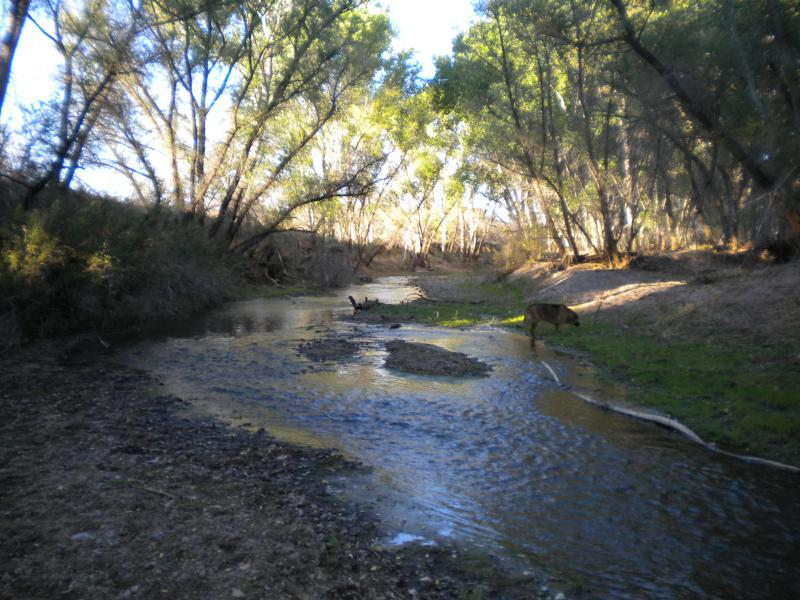The San Pedro River