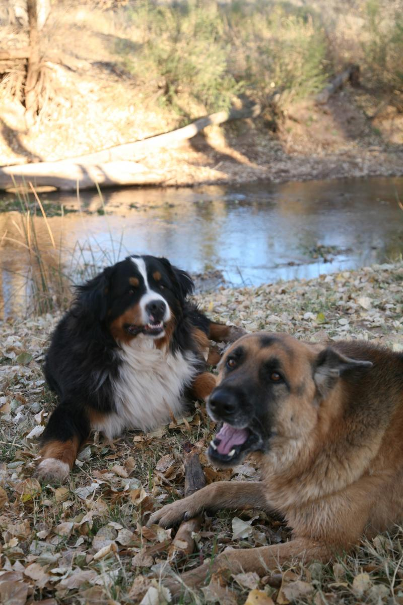 Mack and Thor down by the river